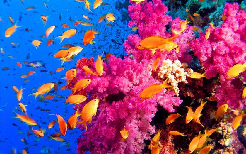 coral-reef2