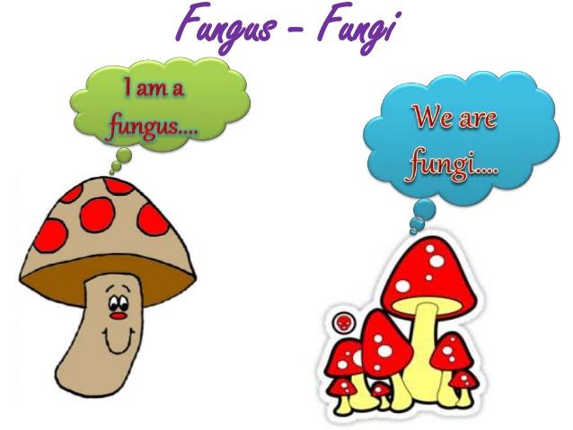 singular-and-plural