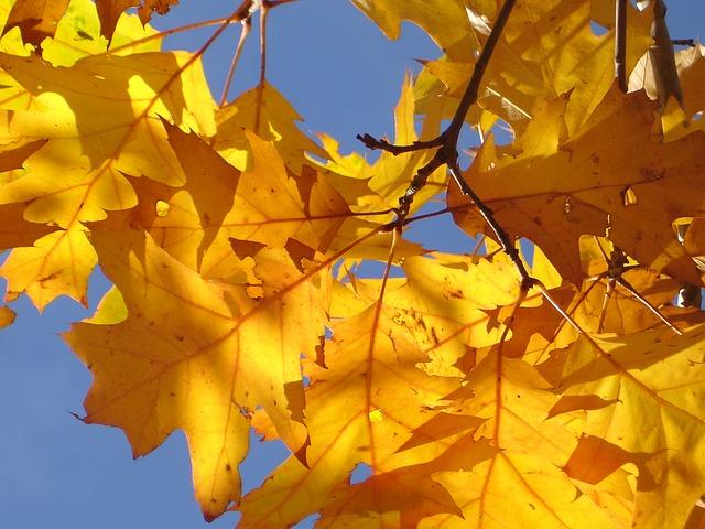 golden-leaves2