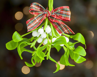 mistletoe-at-home