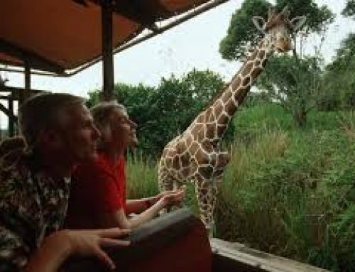 The Letter of Application:   Part-time guide in a Wildlife Theme Park