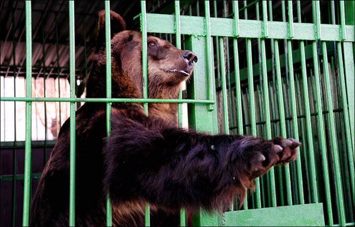 are zoos cruel or educational essay Nowodays a lot of animals live in zoos is it right or wrong to keep them in the zoos the following essay presents some pros and cons of this problem first.