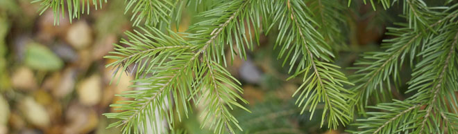 Evergreen-Header