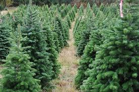 tree-farm2