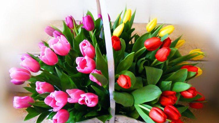 tulips-basket