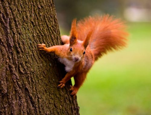 Interesting Facts About Squirrels