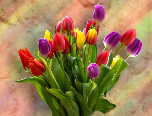 Fun Facts About Tulips