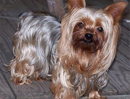 My Dog Jessie