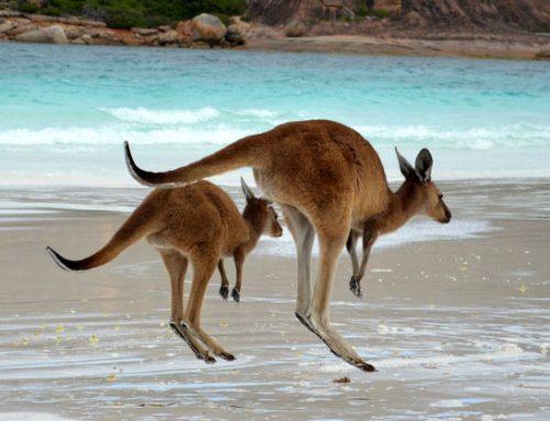Would You Visit Australia?